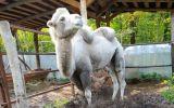 Новости: Почему гибнут  животные в зоопарке? - новости Чебоксары, Чувашия