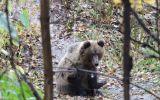 Новости: Медвежонок в городе - новости Чебоксары, Чувашия