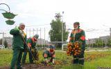 Новости: Новочебоксарск прихорашивается - новости Чебоксары, Чувашия