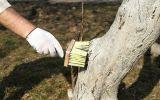 Новости: Как вылечить деревья - новости Чебоксары, Чувашия