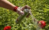 Новости: Защитим огород от непрошеных гостей - новости Чебоксары, Чувашия