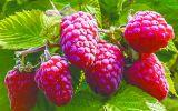 Новости: Новосибирский питомник предлагает зимостойкие растения для северных регионов России - новости Чебоксары, Чувашия