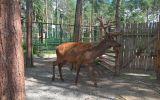 Новости: В зоопарк из Красной книги - новости Чебоксары, Чувашия