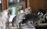 Новости: Задыхаемся от кошачьей вони - новости Чебоксары, Чувашия
