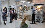 Новости: Заповедник в музее - новости Чебоксары, Чувашия