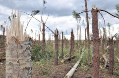 © Фото Валерия БАКЛАНОВАНа земле лежали деревья и крыши домов Новый год-2013 ураган года итоги года