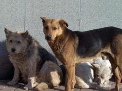Регистрировать  и чипировать! бездомные животные