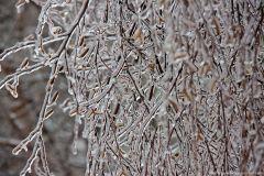Снегопад и ледяной дождь обрушатся на Центральную Россию