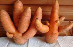 """Морковь с достоинством сказала: """"Деток у меня немало, все они прелестные, оранжево-полезные!""""Осеннее лето позади, а работы невпроворот Чем заняться?"""