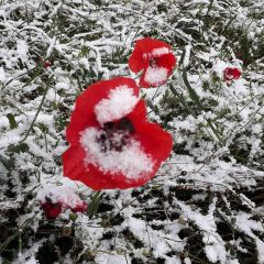 Фото дня: С первым снегом! снег