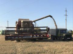 С поля урожай — сразу в закрома.  Фото автораНравится зерно убирать. И все тут! Человек труда Есть такая профессия