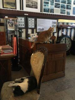 Кошки в музее.Стамбул Великолепный Колесо путешествий
