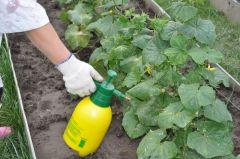 Внекорневая подкормка играет немаловажную роль для получения большого урожая. Фото dacha.helpВажные дела нас ждут в июне Чем заняться