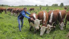 В полеМинсельхоз Чувашии намерен развивать в 2021 году 4 вида грантовой поддержки развитие АПК