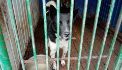 Бездомный песПриюты для бездомных животных построят в четырех районах Чувашии бездомные животные