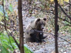 Фото Г. ИсаковаПо Чебоксарам погулял годовалый медвежонок