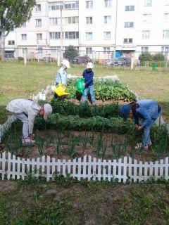 """Какие только овощи не растут на грядках дошколят: лук, томаты, капуста.  Фото из архива детского садаОвощеводы из """"Березки""""  скоро соберут урожай"""