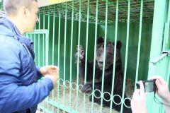 Фото автораПотапыч будет жить  в зоопарке 2017 - Год экологии и особо охраняемых природных территорий 2017 - Год Ельниковской рощи