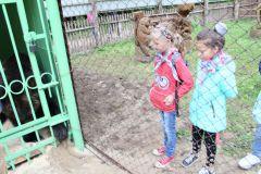 IMG_0078.JPGВ Новочебоксарском зоопарке поселился медведь Потапыч (фото, видео) В зоопарке 2017 - Год Ельниковской рощи