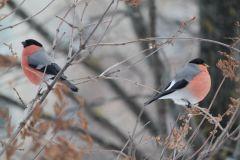 IMG_0169.JPGЭти смешные птицы (фото) Проект: Как я провел выходные Международный день птиц день дурака