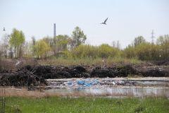Гнилое болото на пересечении улиц Ивановской и Промышленной.Окружили! мусор в городе