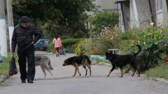 В Иванове бродячие собаки чувствуют себя вольготно.   Фото Юрия НикандроваИ страшно, и жалко бродячие собаки
