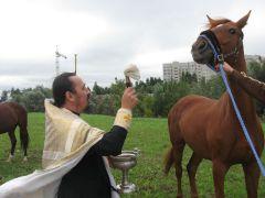 У лошадей праздник.  Фото автораУ коней высокие покровители