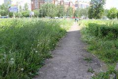 Трава выше кустарника. Фото Марии СмирновойПро траву и тротуар благоустройство