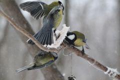 IMG_0464.JPGЭти смешные птицы (фото) Проект: Как я провел выходные Международный день птиц день дурака