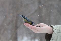 IMG_0506.JPGЭти смешные птицы (фото) Проект: Как я провел выходные Международный день птиц день дурака