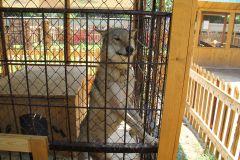 Капрал пока наблюдает за жизнью зоопарка.Меню для зверинца фоторепортаж