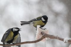 IMG_0562.JPGЭти смешные птицы (фото) Проект: Как я провел выходные Международный день птиц день дурака