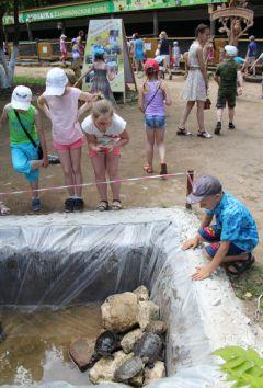 Хорошо черепахам в большом бассейне. Фото Марии СМИРНОВОЙМеню для зверинца фоторепортаж