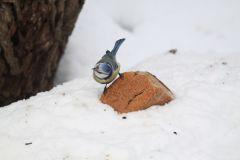 IMG_1282.JPGЭти смешные птицы (фото) Проект: Как я провел выходные Международный день птиц день дурака