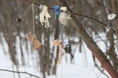 IMG_1288.JPGЭти смешные птицы (фото) Проект: Как я провел выходные Международный день птиц день дурака