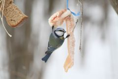 IMG_1302.JPGЭти смешные птицы (фото) Проект: Как я провел выходные Международный день птиц день дурака