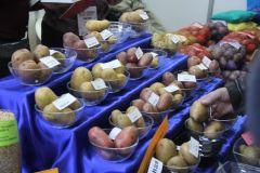 Более 30 сортов картофеля отечественной и зарубежной селекции представили аграрии.Картофельный Манифест легко выращивать Хлеб насущный Картофель-2018