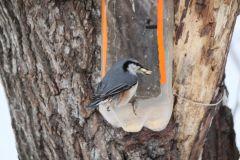 IMG_1312.JPGЭти смешные птицы (фото) Проект: Как я провел выходные Международный день птиц день дурака