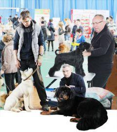 Коллаж Марии СмирновойПраздник большой семьи выставка собак всероссийская выставка собак