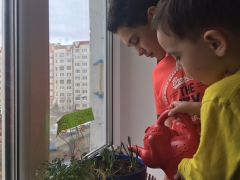 Васин огород. Фото автораСидим дома Школа-пресс