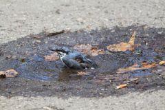 IMG_4046.JPGЭти смешные птицы (фото) Проект: Как я провел выходные Международный день птиц день дурака
