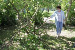 А вот высохшие деревья нужно убрать. Фото Максима БоброваАллея ветеранов: вы шумите, березы Комфортная среда