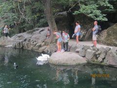 Озеро с лебедями в Воронцовском парке.Южный берег Крыма: от Алушты до Фороса крым Колесо путешествий