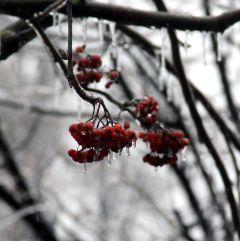 Из-за ледяного дождя 25 декабря в Новочебоксарске отменяются занятия в школах