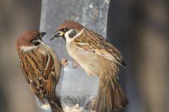 IMG_8985.JPGЭти смешные птицы (фото) Проект: Как я провел выходные Международный день птиц день дурака