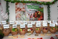 Наряду с картофелем участники форума привезли лучшие сорта яблок и других сельхозкультур.Картофельный Манифест легко выращивать Хлеб насущный Картофель-2018