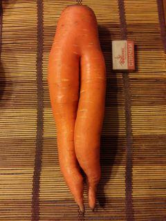 Вот такая морковь выросла в огороде у горожанки Елены Андреевой. Фото автораСовместимость культур  Страна советов Севооборот