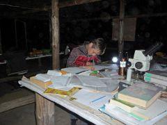 Ночь — лучшее время для оформления исследования. Наконец-то можно спокойно поработать одному.Видно сокола по полету Школа дикой природы