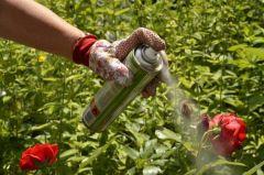 Защитим огород от непрошеных гостей Чем заняться