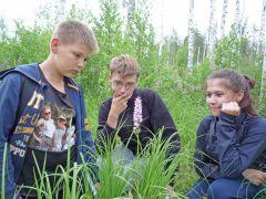 Орхидея в чувашских лесах встречается редко, поэтому она занесена в Красную книгу.Видно сокола по полету Школа дикой природы